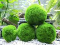 1 x MARIMO MOSS BALL (3 to 5cm) Aquarium live plant Cladophora fish tank shrimp
