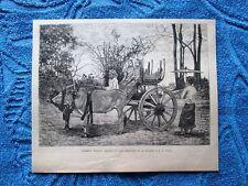 Carretta Birmana 1882
