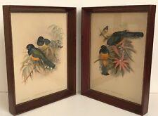 Vintage J. GOULD & H.C. RICHTER Bird lithograph prints (2), wood framed, 10x13