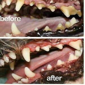 Pet Clean Freshener Dental Spray Dog Oral Care Bad Breath Teeth NEU Breath C6E3