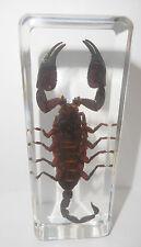 Black Scorpion Asian Forest Scorpion in 110x43x30 mm Block Education Specimen