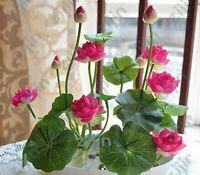 10 Graines Fleur de LOTUS Sacré ROSE Cultiver en intérieur BASSIN Toute l'Année