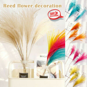 10Pcs Dried Pampas Grass Reed Flower Bunch Bouquet Home Decoration