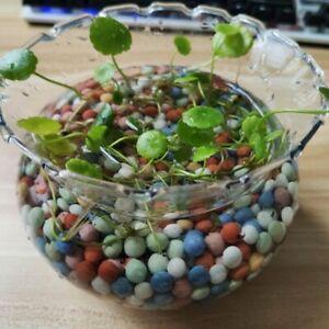 500 Decorative Pebbles Clay Bonsai Succulents Fish Tank Balls Growing Hydroponic