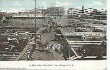 Chicago Union Stock Yards Busy Alley Postcard 1908