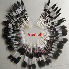 1 set of (51pcs) rare natural feathers 10-16 inch beautiful patterns feather E