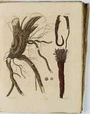 F. GOEBEL, Pharmaceutische Waarenkunde m. illum. Kupfern, Bd. 2, Heft 2, 1830