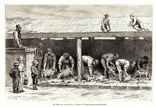 Antique print Australia australian sheep shearer shearing shearers 1880