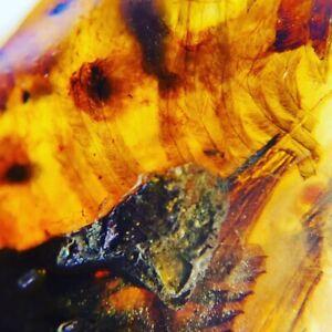 Dino-Bird HEAD - dinosaur fossil with Portofeathers, Genuine Burmite Amber 98MYO