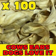 100 x TASTY COW COWS BEEF EAR EARS DOG PET TREAT CHEW SNACK - VALUE