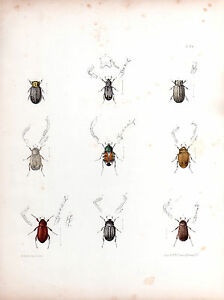 INSECTS 1850's original vintage handpainted engraving plate #24