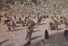 "*Postcard-""Chimpanzees ...In Living Area""  (U2-132)"