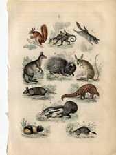 1861 Martin Hc Wood Engraving opossum, anteater, armadillo, kangaroo, pangolin.