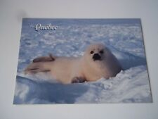 Quebec, Canada postcard - fauna, baby seal on ice. Unused (not postally used).