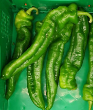 Pimiento Dulce Italiano 200 semillas frescas