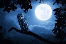 Home Art Decor Moon Flying Owl Bird Oil Painting Picture Printed On Canvas VII