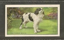 1936 UK Dog Art Body Gallaher Cigarette Card Prince Charles ENGLISH TOY SPANIEL