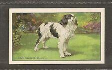 1936 UK Dog Art Body Gallaher Cigarette Card Prince Charles ENGLISH TOY SPANIEL