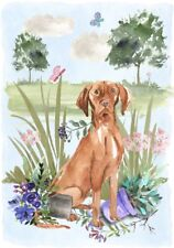 "Hungarian Vizsla Dog (4"" x 6"") Blank Card / Notelet Design By Starprint"