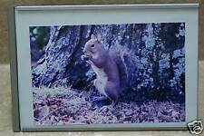 5 x 7~Picture~Frame~Horizonta l~Or~Vertical~Great~Frame