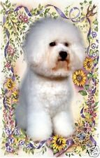 Bichon Frise Pack of 5 Blank Cards A6 No 5 by Starprint