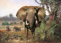 Wild Elephant - Large A2 size Modern Decor Canvas Wall Art Print Poster Unframed