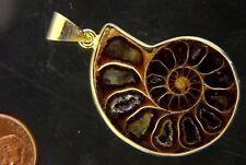 BUTW Gold Electroformrd Ammonite nautiloid fossil pendant necklace jewelry 7271P