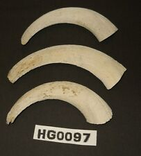 Lot of 3 Goat Horn Cores for crafts carving decorations lodge cabin etc Hg0097