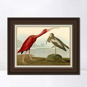 "Framed Canvas Art Giclee Print Scarlet Ibis by John James Audubon 30""x40"""