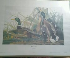 MALLARD DUCK AUDUBON COLLOGRAPH  Aaron Ashley WILDLIFE 30 X 23""