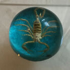 Vintage Scorpion Paperweight Resin Acrylic Turquoise Round 70'sTaxidermy Bug