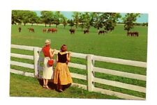 USA - Blue Grass Horse Farm in Kentucky - Vintage Postcard