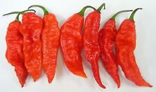 100 Bhut Jolokia Red Ghost Pepper Seeds Extreme Hot Chili Heirloom World Record