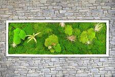 Pflanzenbild kaufen Moosbild mit lebenden Pflanzen Wandbild Moos Wanddeko Poster