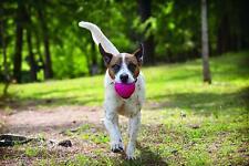 West Paw Zogoflex Air Boz Ball GUARANTEED TOUGH Dog Toy