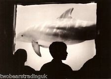 Postcard: Wallace Photography - Dolphin On Display (Boomerang Media Promo)