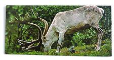 merveilles du monde nestle animaux des regions polaires 44 le renne