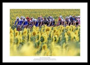 Tour de France Peloton 'Sunflower Field' Cycling Photo Memorabilia (952)
