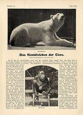 Gemütsleben der Tiere Ausgestorbene Beutelkatze Zoologischer Garten Berlin 1901