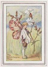 CICELY MARY BARKER c1930 THE WHITE CAMPION FAIRY Painting Vintage Art Book Print