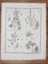 Houblon Houx Hyssope GRAVURE Botanique ROZIER Cours AgrIculture XVIIIème Sellier