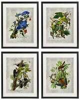 Vintage Bird & Botanical No.5 Home Decor Wall Art Print Set of 4 Prints UNFRAMED