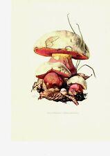 Impresión en color hongos: de Satanás-röhrling Boletus ORIG 1963 offset Caspari lithog Mushroom