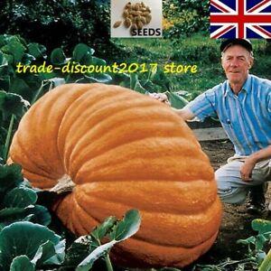 10 Seeds of Pumpkin Dills Atlantic Giant Cucurbita Maxima Annual Plant UK SELLER