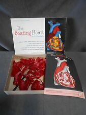 Vintage Educational Products Inc. EPI Modern Man The Beating Heart Model Kit