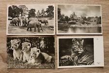 AK Hamburg 1930-50er Carl Hagenbeck Tierpark Zoo Tier Elefant Löwenbaby Vögel ++