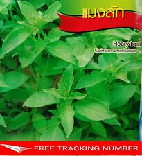 4x 600 Seeds Hoary Basil Chia Tai Quality Seed Home Garden Plant Thai Vegetable