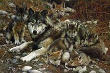 Carl Brenders DEN MOTHER WOLF FAMILY art print
