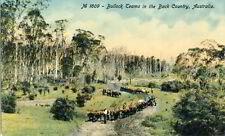 Ansichtskarte Bullock Teams um 1910 Australia Post Card Australien