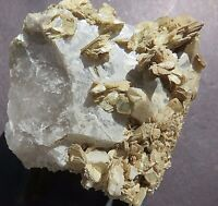 QUARTZ CRYSTAL w/ Muscovite crystals coated with cookeite - Newry, Maine